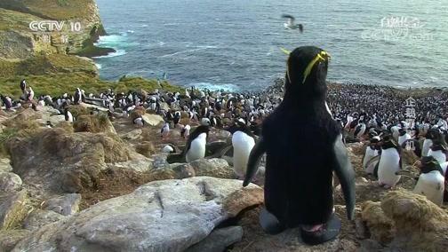 《自然传奇》 20200507 企鹅摄影机