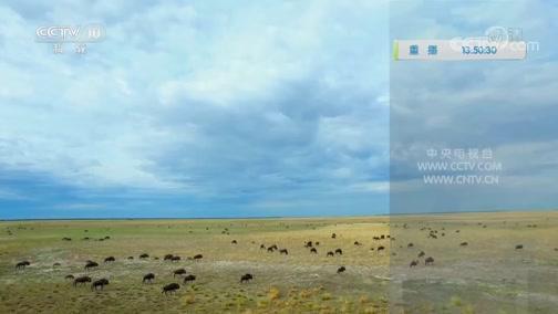 《自然传奇》 20200609 鬣狗部族