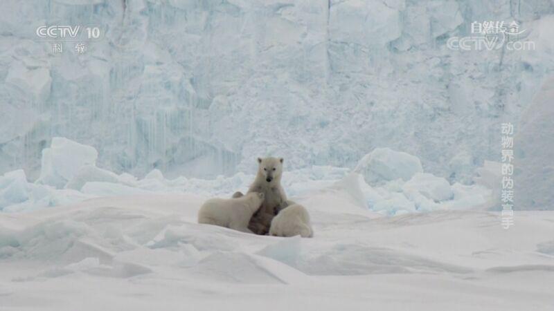 《自然传奇》 20201030 动物界的伪装高手