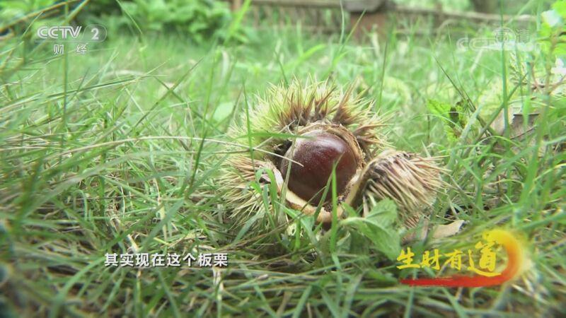 《生财有道》 20201110 四川丹棱:美美的味道 幸福的生活