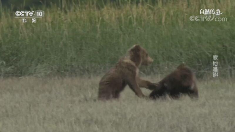 《自然传奇》 20201111 寒地追熊
