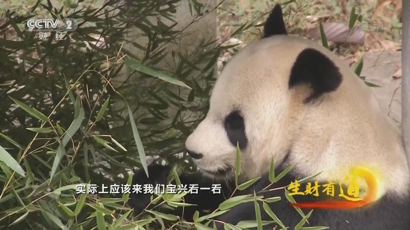 《生财有道》 20210107 四川宝兴:熊猫老家宝贝多 生态特产兴万家
