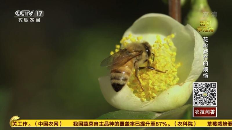 《田间示范秀》 20210114 花粉减产的烦恼