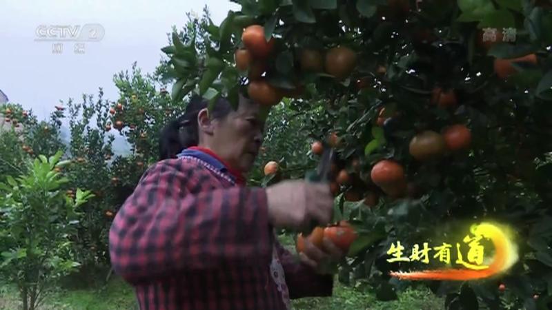 《生财有道》 20210121 咱们家乡有特产——橘乡产业链 富美看忠县