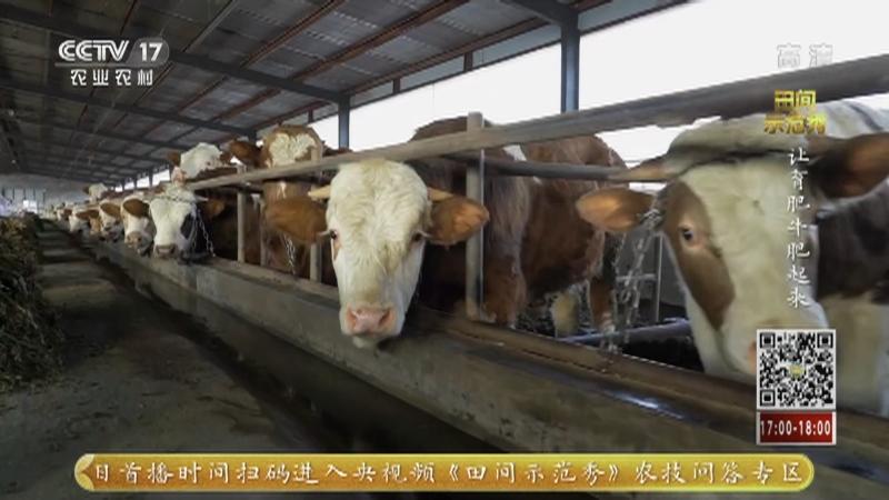 《田间示范秀》 20210326 让育肥牛肥起来