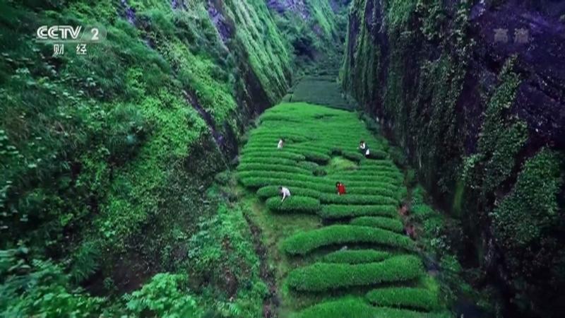 《生财有道》 20210330 福建武夷山:以茶兴旅 茶旅融合生财路