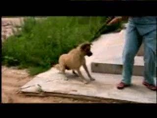 《绿色空间》:2006动物园记忆