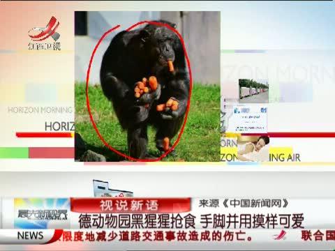 动物园里疯狂黑猩猩持棍斗殴