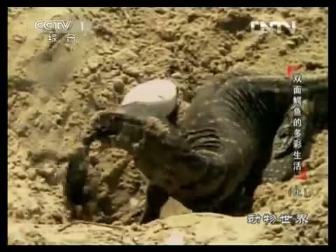 动物世界(娱乐)_中国网络电视台