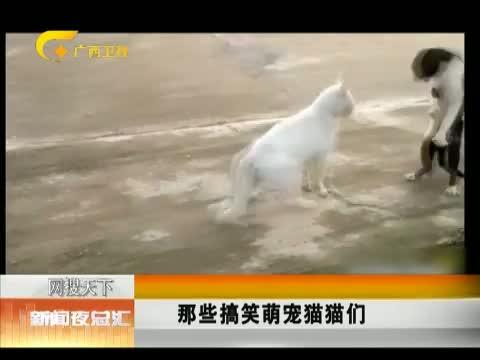 XM专题策划_猫咪斗气 两腿起立 00:00:20