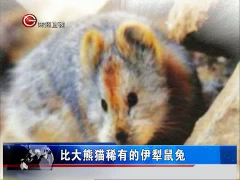 最新更新-爱西柚-cntv中国网络电视台