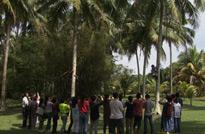 海南文昌,当地百姓徒手上树摘椰子的情景