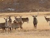 长毛岭马鹿自然保护区