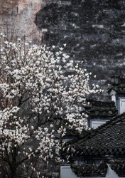 Flowers seen in front of ancient houses in Huangshan City, Anhui