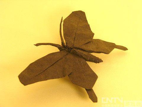 从螳螂松鼠到凤凰天鹅 超神奇折纸作品鉴赏(三)