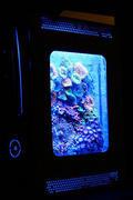 Xbox 360主机箱MOD珊瑚水族馆