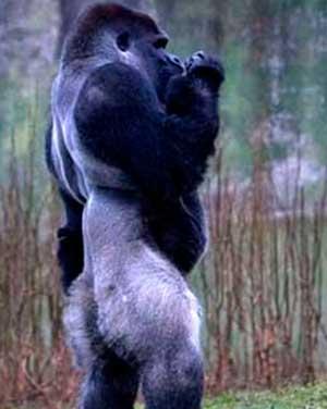 十二金刚:世界上最致命的12种动物