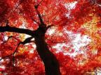 http://kx8yl.8pjs.com/photoAlbum/photo/2013/10/29/PHOT1383033033521883_144x144.jpg