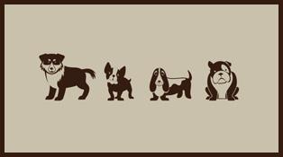 狗狗的信息可视化
