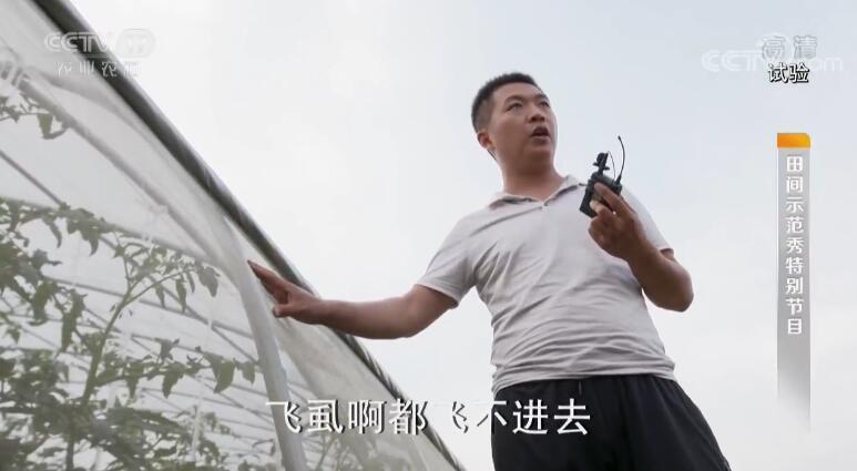 《田间示范秀》 20190815 自媒体人教你种出好番茄
