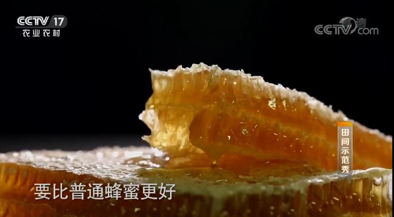 《田间示范秀》 20191011 巢蜜生产的风波