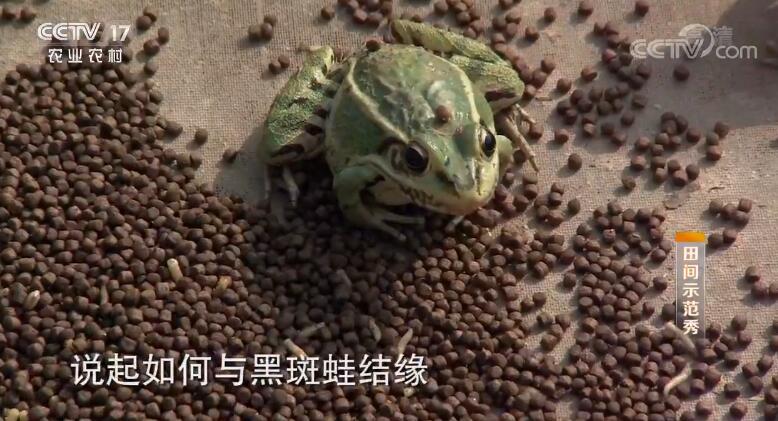《田间示范秀》20191018 蛙稻共生巧增收