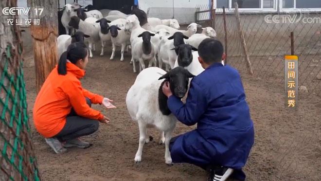 《田间示范秀》 20200122 羊小伙儿遇到老羊倌