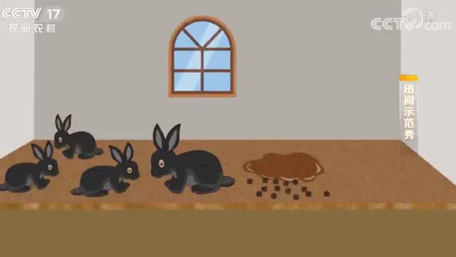 《田间示范秀》 20200313 让黑兔快长大