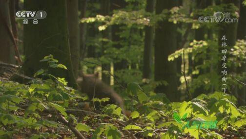 《人与自然》 20200729 森林四季交响曲(下)