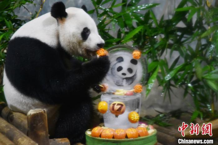 """工作人員為""""秋浜""""準備的冰雕熊貓蛋糕 李木生攝"""