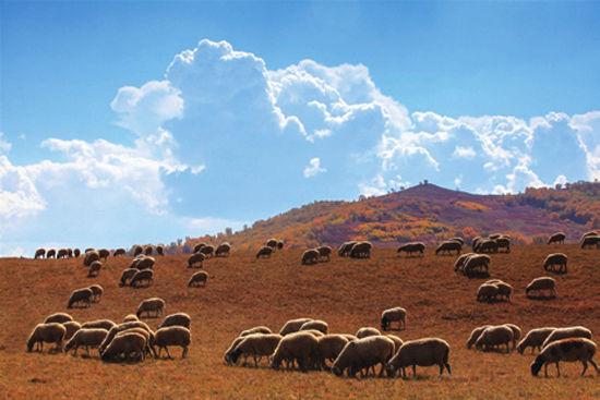 风吹草低见牛羊的草原景色。
