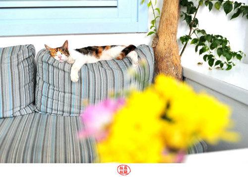 米克诺斯慵懒的小猫