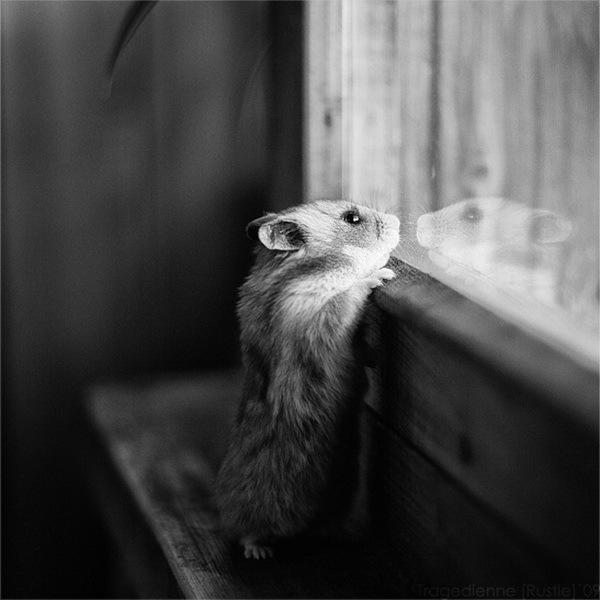 盘点治愈系萌宠物:猴子给猫温情按摩 科教台