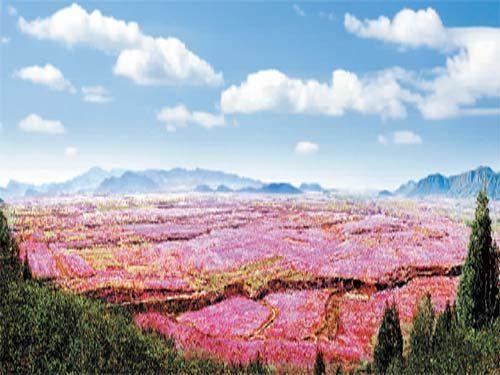 桃花朵朵开 国内五大赏桃花佳地碰出桃花运