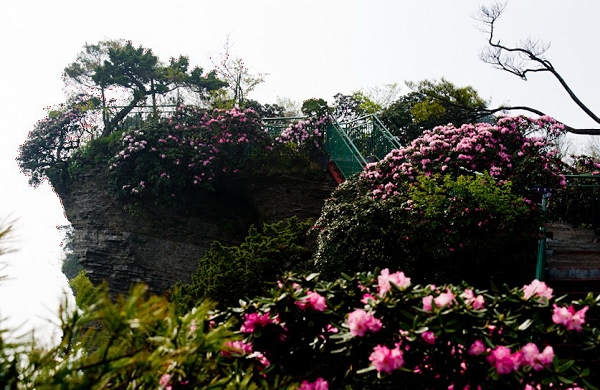 """印制""""2013年首届南江县光雾山杜鹃花节""""统一的文化衫"""