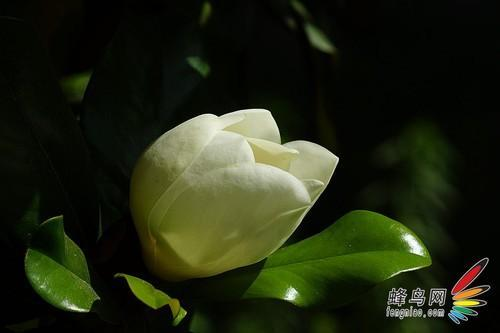 花卉摄影 用光