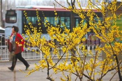 京城春天花儿开六条线玩转植物园(图)