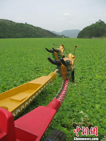 广西龙江河水生植物大面积爆发 环保局:水质达标