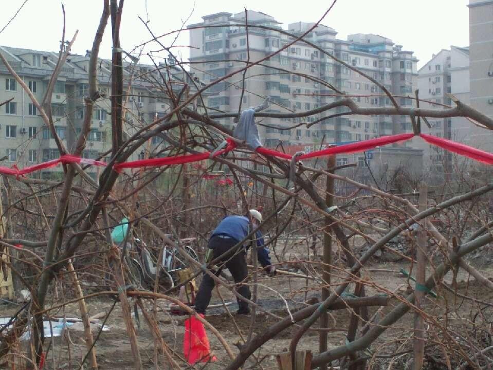 西区闲置的空地成了垃圾场和居民种菜的地方。