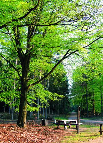 荷兰的森林公园