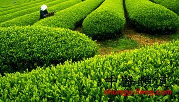凤凰中医:茶叶残渣用处多 消除黑眼圈去脚臭还能抗皱