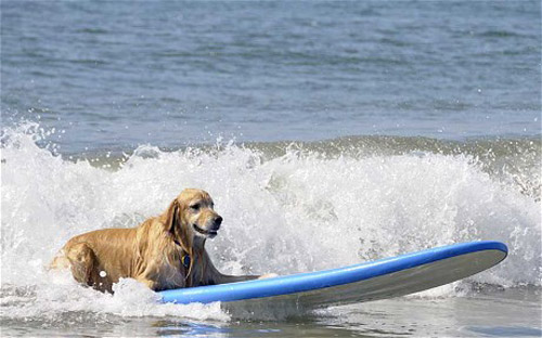 狗狗的奢华假日有世界冠军陪跑