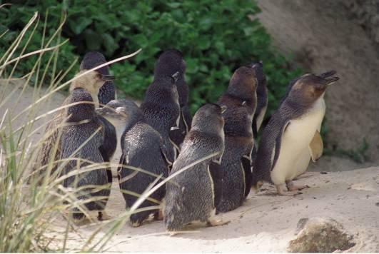神仙小企鹅
