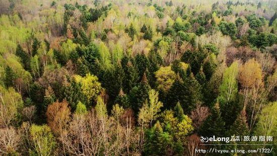 绿意葱茏盘点国内十大森林氧吧