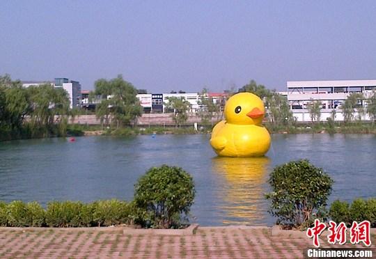 """据报道,荷兰艺术家弗洛伦泰因·霍夫曼的艺术作品""""大黄鸭"""",已经获批进驻北京,将借参加""""北京国际设计周""""之机,于9月16日""""游""""到颐和园。图为近日一只""""山寨大黄鸭""""出现在北京金港汽车公园的人工湖上,抢先亮相北京。中新社发 侯宇 摄"""