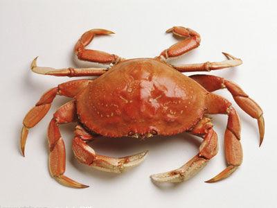 快速鉴别螃蟹好坏
