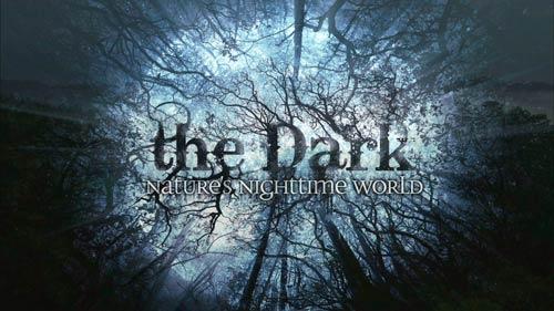 黑暗中的自然界