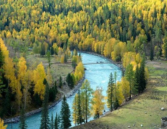 شجرة الأركس سيبيرية