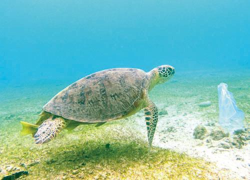 为了拯救包括绿海龟在内的海洋生物