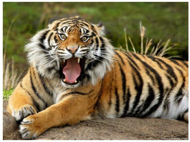 上海动物园一饲养员被华南虎咬死(图)